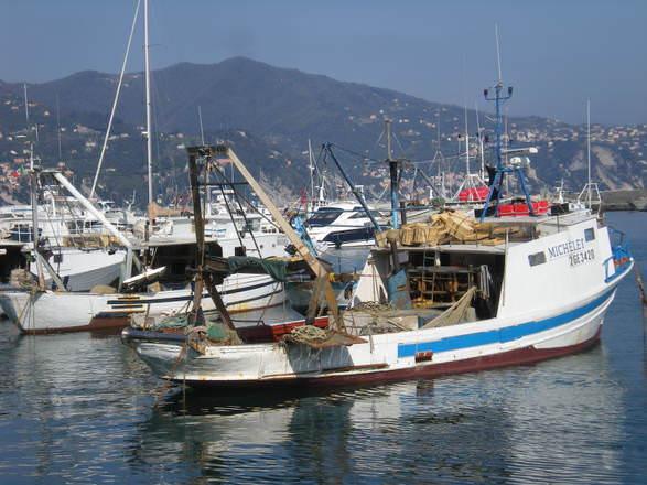 A.A.A. pescatori cercasi, che pesce mangiare? pesce d'agosto