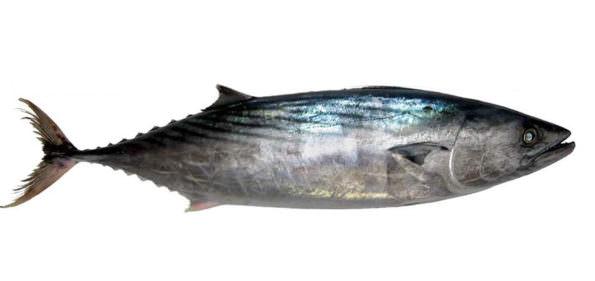 pesce a febbraio